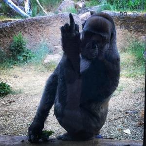 Cheyenne Zoo Gorilla
