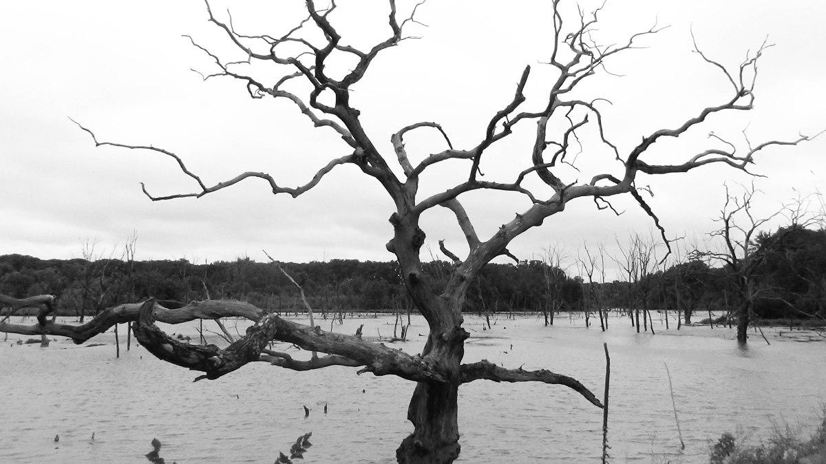 Brushy Creek State Rec Area – LakeLoop